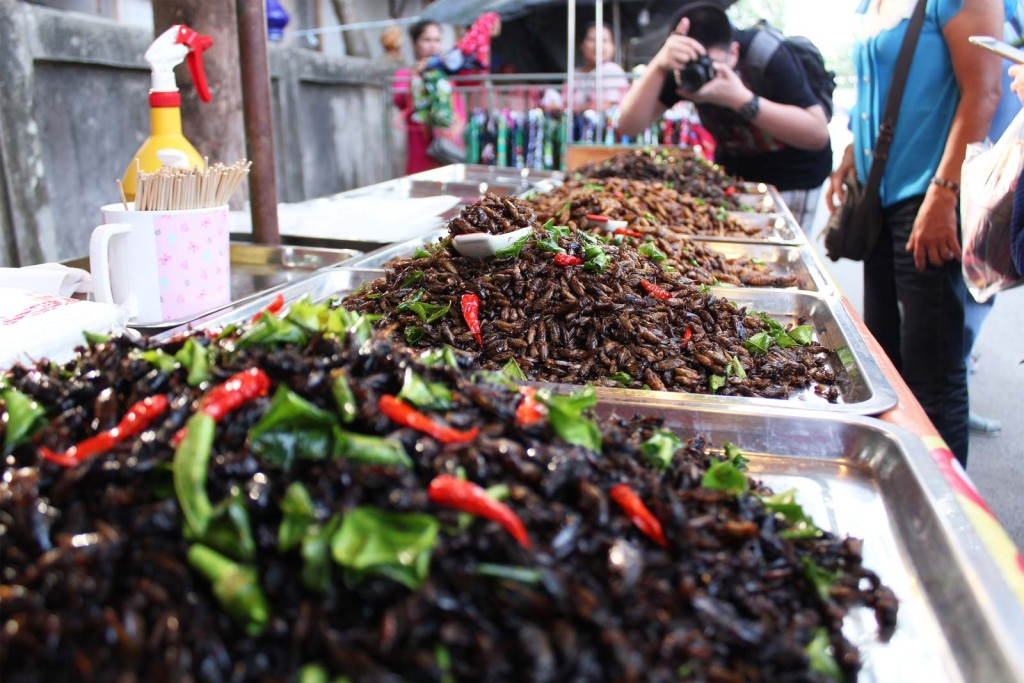 Exotic food 'insects' found in Hatyai